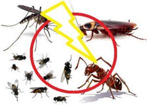 Diệt muỗi và côn trùng gây hại