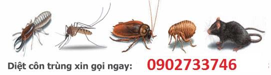 Diệt muỗi tại thành phố Cao Lãnh